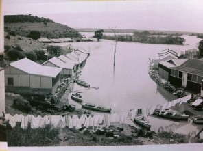 Caloote during the 1956 flood