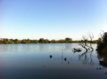 A calm morning on the Murray