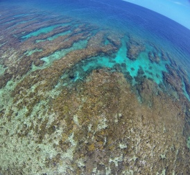 Some beautiful coral spur and grooves, where the reef flat meets the open ocean, captured by the kite.