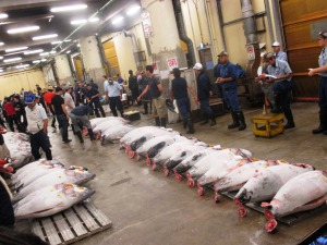 Giant tuna ready to be auctioned off at the Tokyo Fish Markets