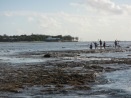 Low-tide on the leeward reef crest