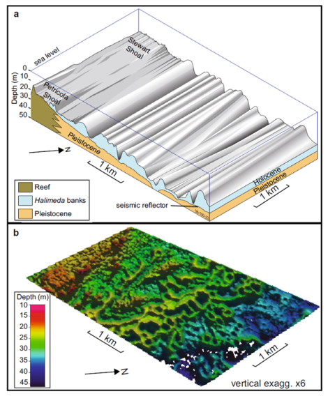 After McNeil, M. A., Webster, J. M., Beaman, R. J., and Graham, T. L., 2016, New constraints on the spatial distribution and morphology of the Halimeda bioherms of the Great Barrier Reef, Australia: Coral Reefs.